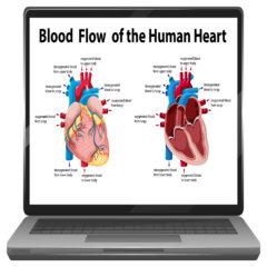 コロナウイルス感染の後遺症の背景とは? その1.血栓と胸の痛みについて